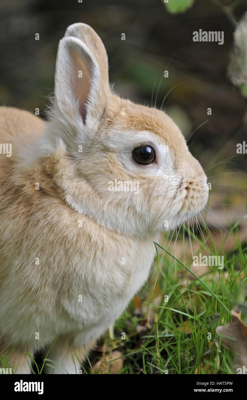 Rabbits - Stock Image
