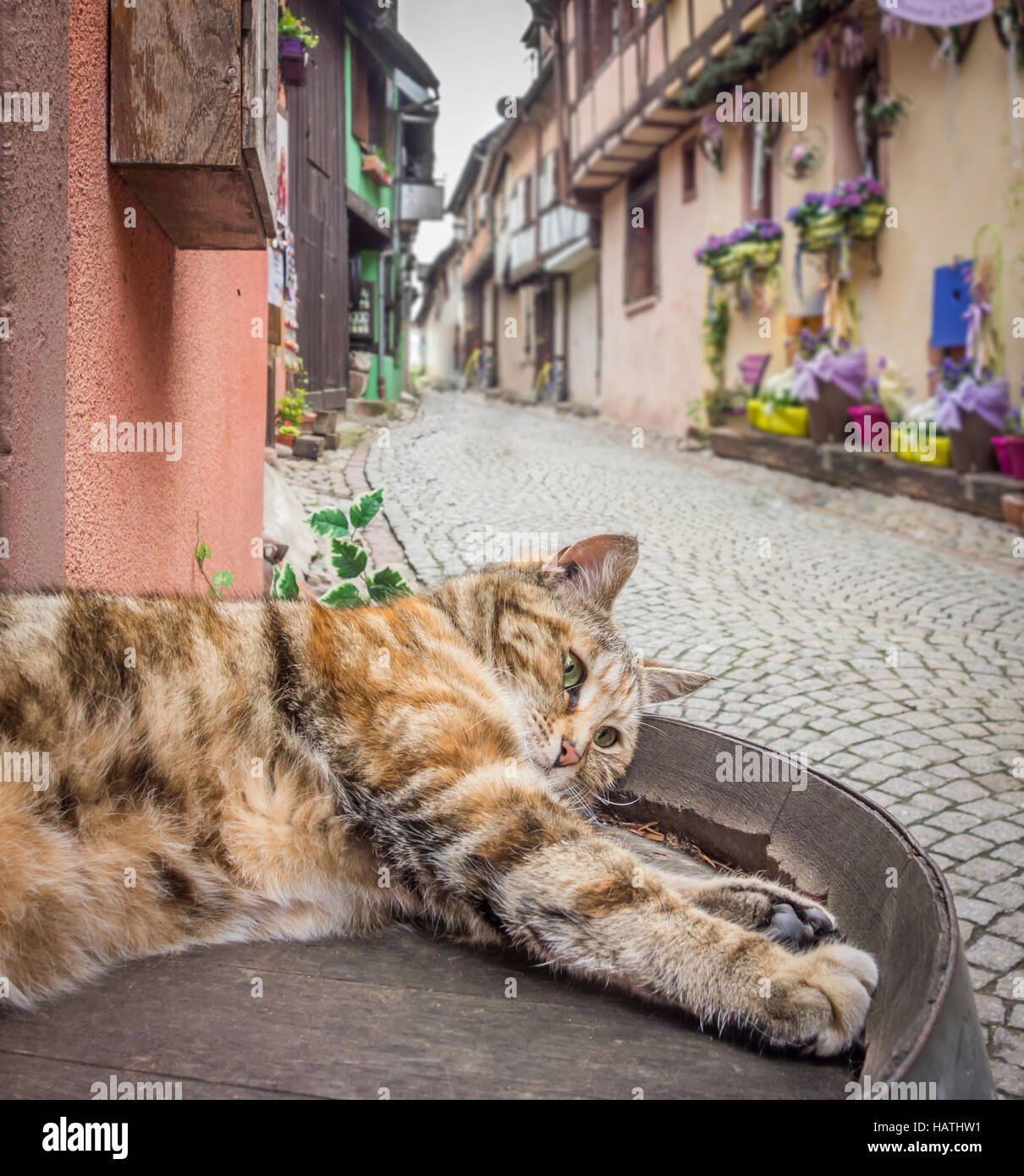 A lazy cat sprawling out on a quaint street in Riquewihr, France. - Stock Image
