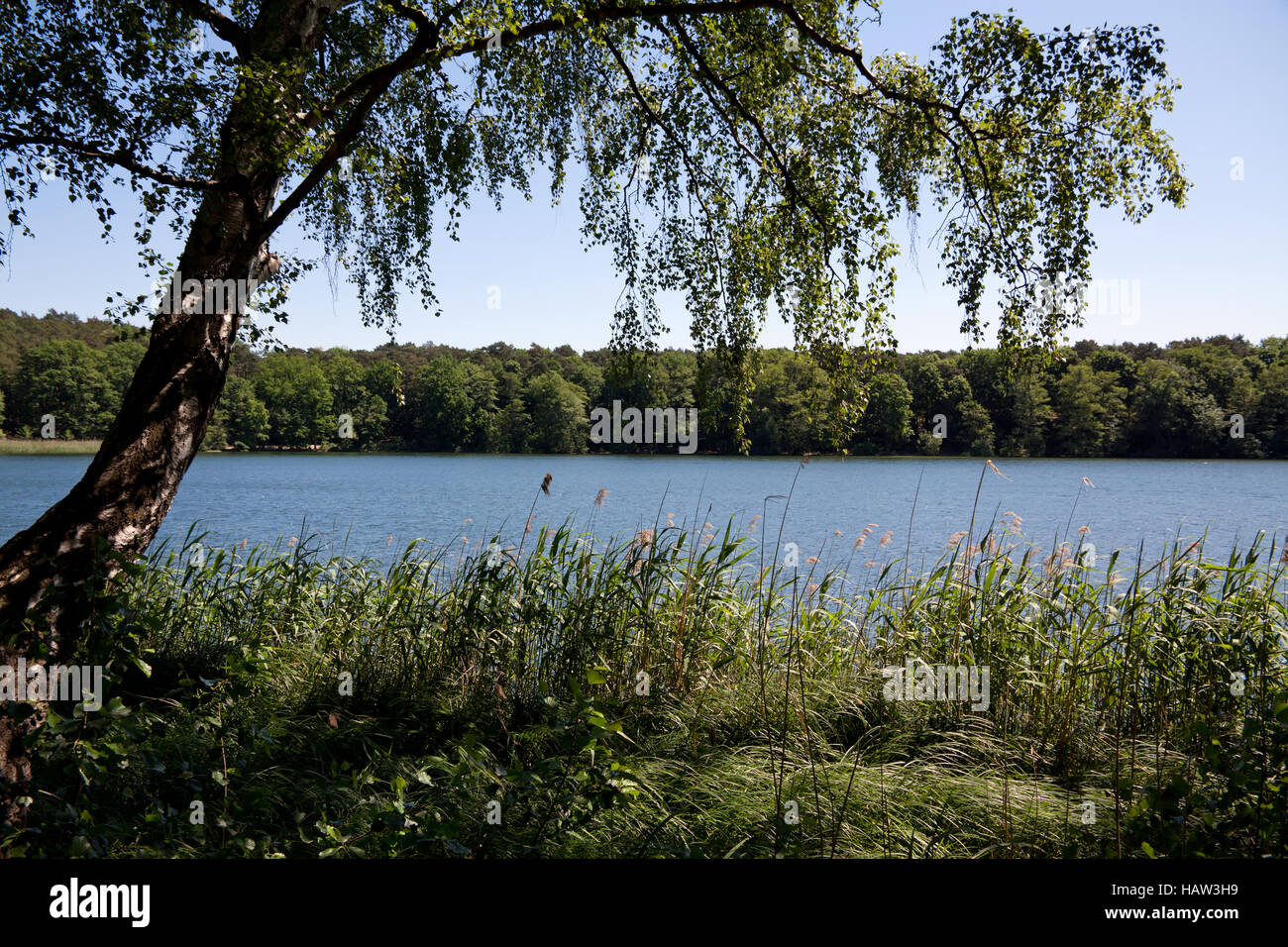 Schlachtensee 002. Germany Stock Photo