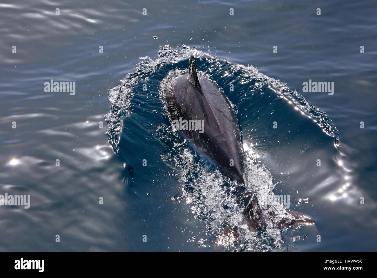 Delfin Watching - Stock Image
