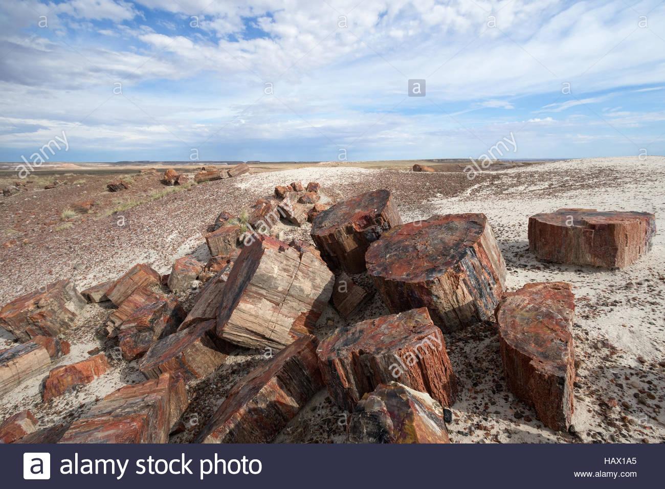 Petrified wood at Petrified Forest National Park, Arizona - Stock Image