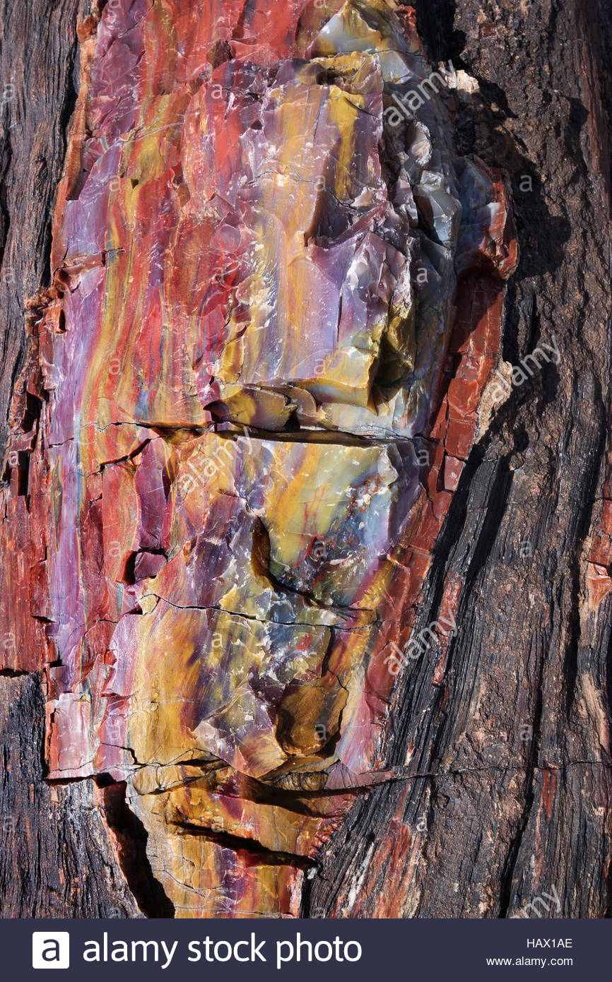 Colorful petrified wood at Petrified Forest National Park, Arizona - Stock Image