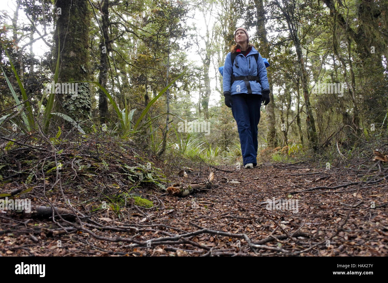 Woman hiker (walks towards  the camera) hiking in Tongariro National Park rain forest in the North Island of New - Stock Image