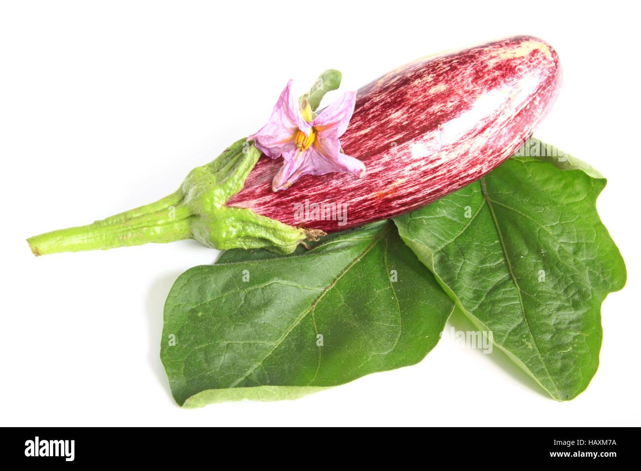 Eggplant (Solanum melongena) Stock Photo