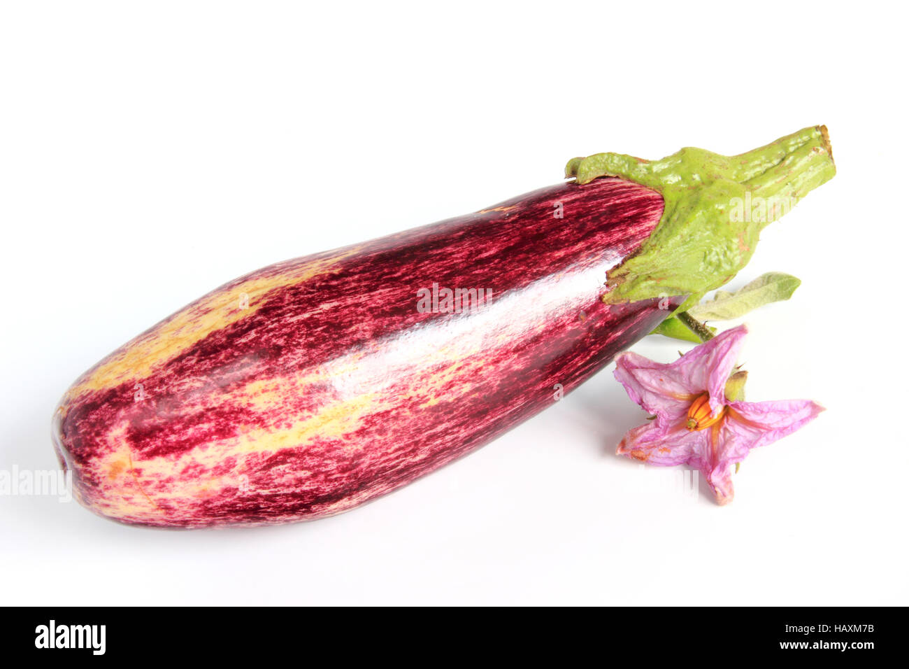 Eggplant (Solanum melongena) Stock Photo
