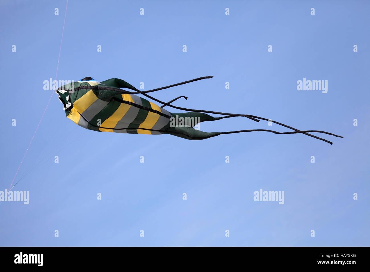 kite - Stock Image