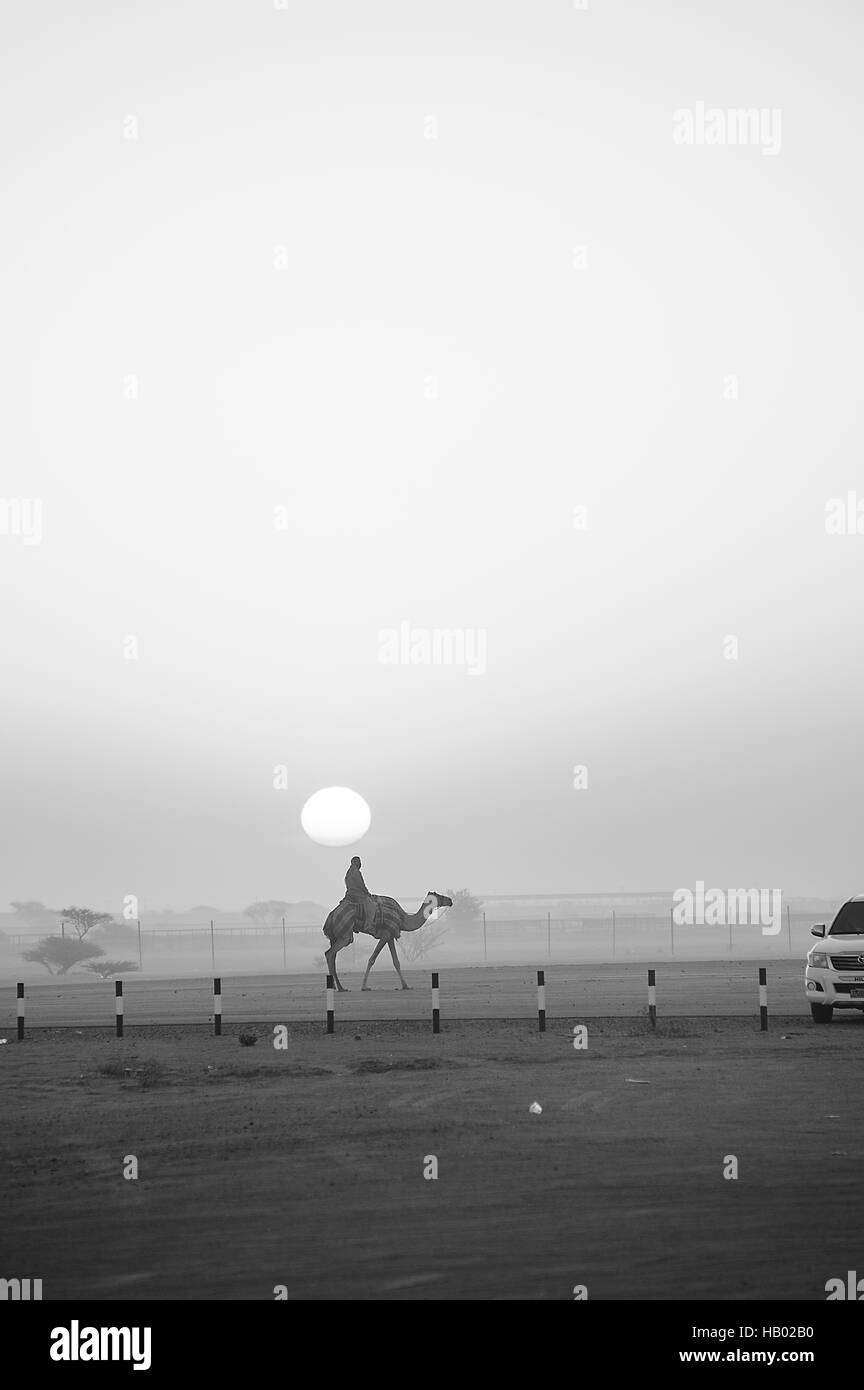 Sunrise silhouettes a camel and rider trotting towards a pickup truck at the camel races in Al Abiadth, Sharqiya, - Stock Image