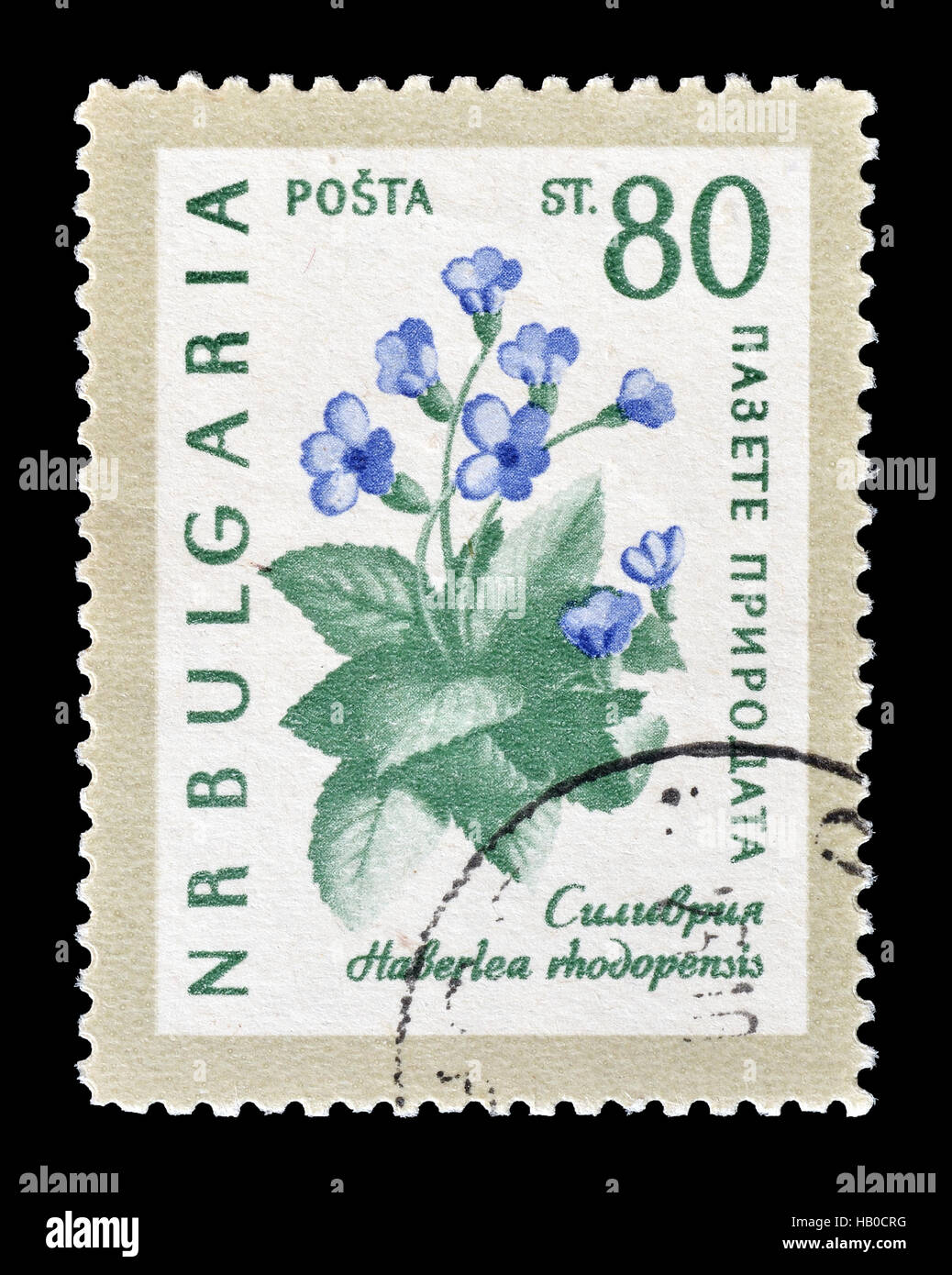 Cancelled postage stamp printed by Bulgaria, that shows Flowers. - Stock Image