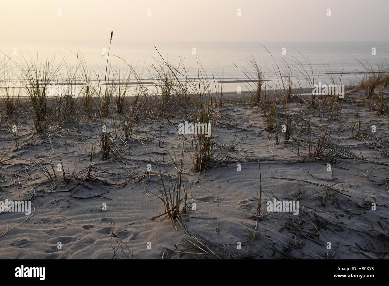 dunes, Egmond aan Zee, The Netherlands - Stock Image