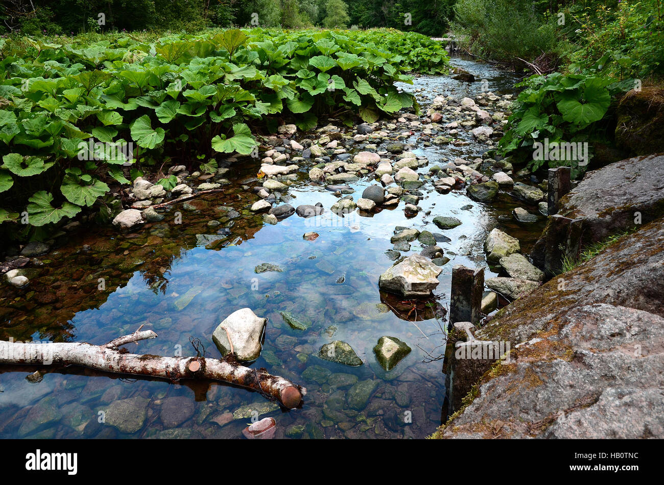 canyon; Wutach; Black forest; Germany; - Stock Image