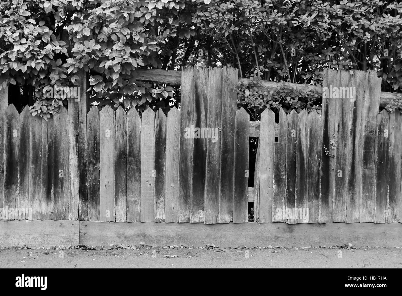 Shabby broken old wooden fence with holes and fallen planks - Stock Image
