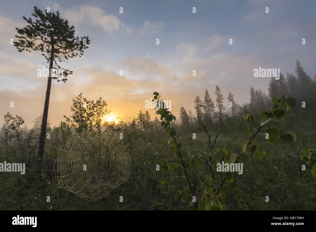 morning mood in swampland, Lapland, Swedem Stock Photo