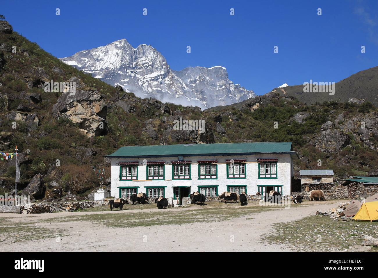 Yaks in front of a lodge in Khumjung - Stock Image