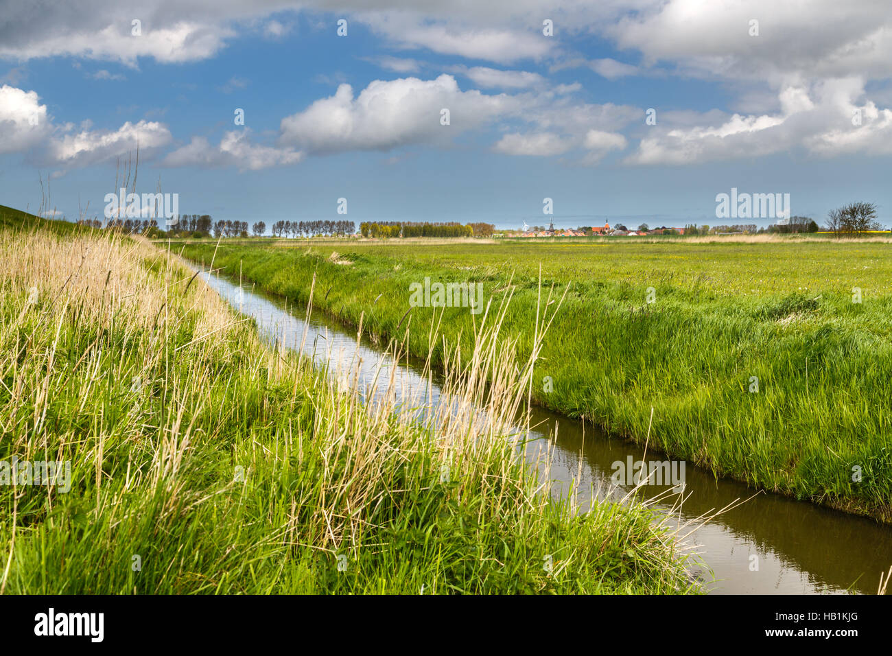Moats in biotope - Stock Image