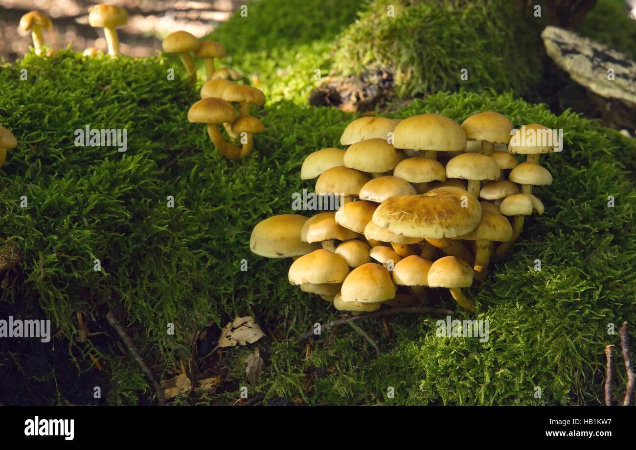 Mushroom Kingdom . - Stock Image
