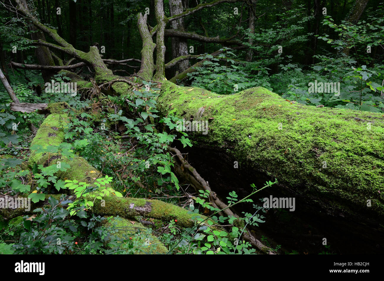 woods, forest, jungle, Stock Photo