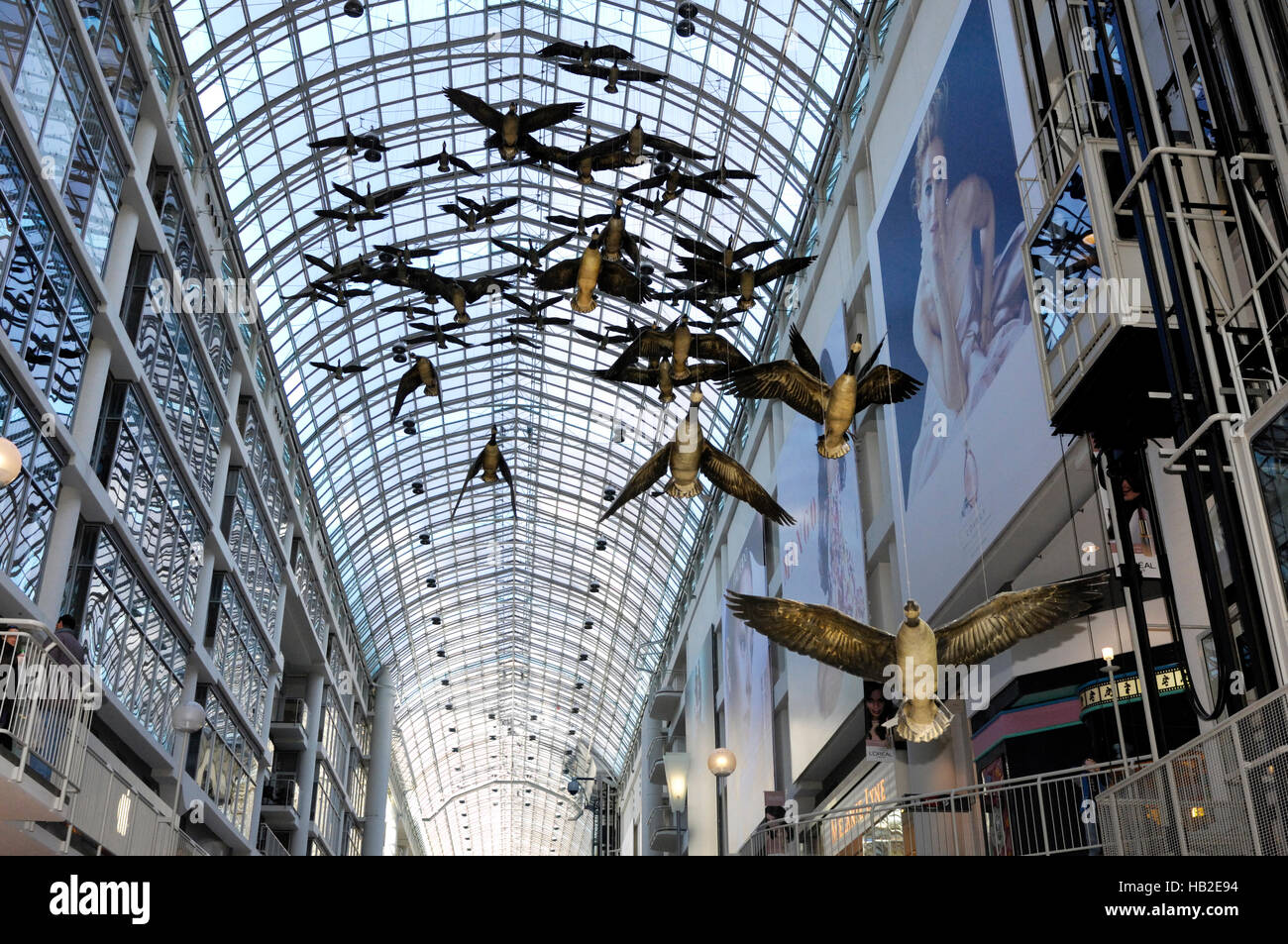 Canada geese flight stop under the glass roof of Toronto Eaton Centre, one of the largest shopping malls in North - Stock Image