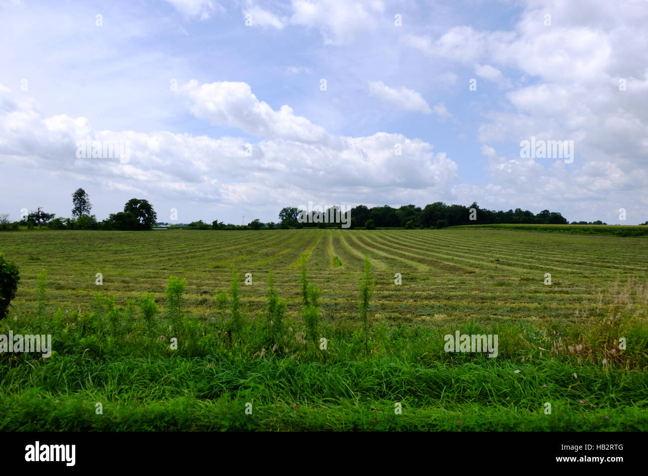 Hayfield in the summer. - Stock Image