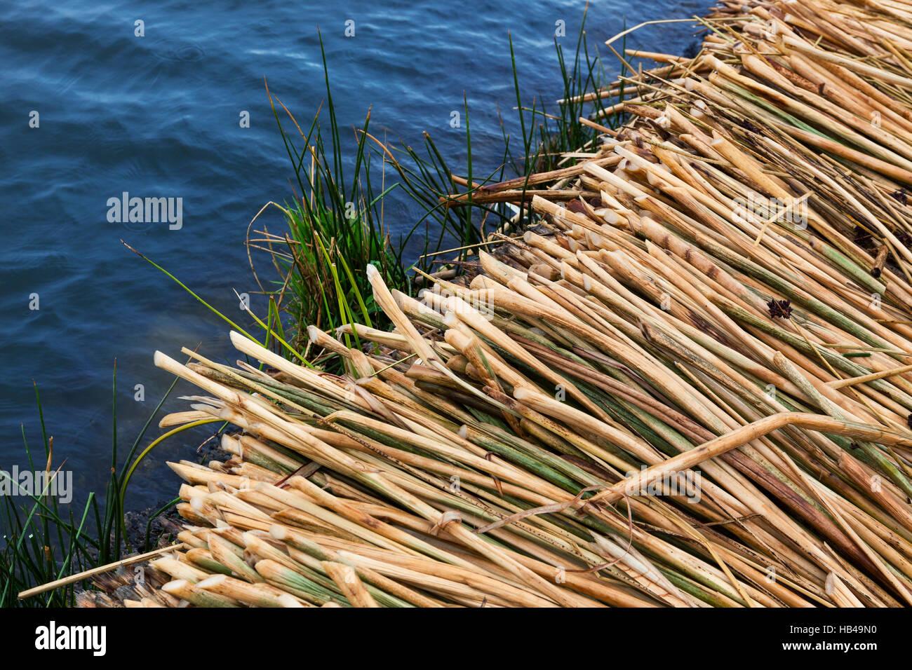 cane island - Stock Image