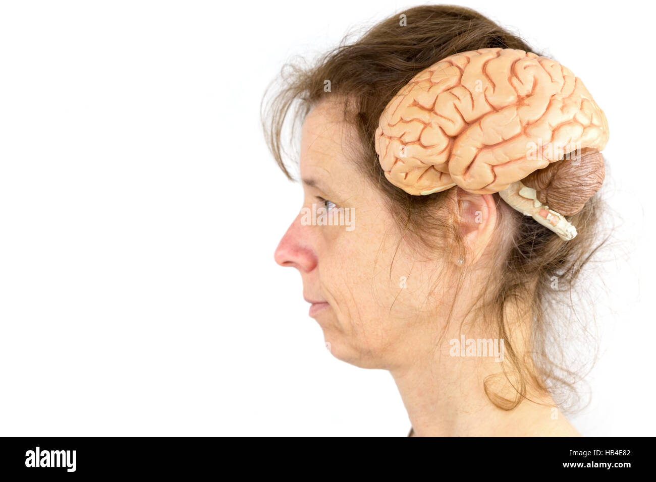 Head of woman with model of human brains - Stock Image
