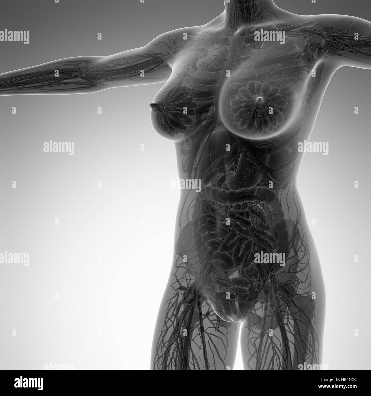 Science Anatomy Of Human Body In X Ray With All Organs Stock Photo