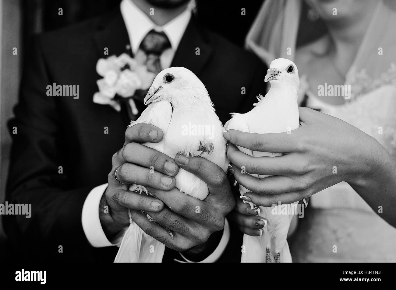 Doves at hand of newlyweds - Stock Image