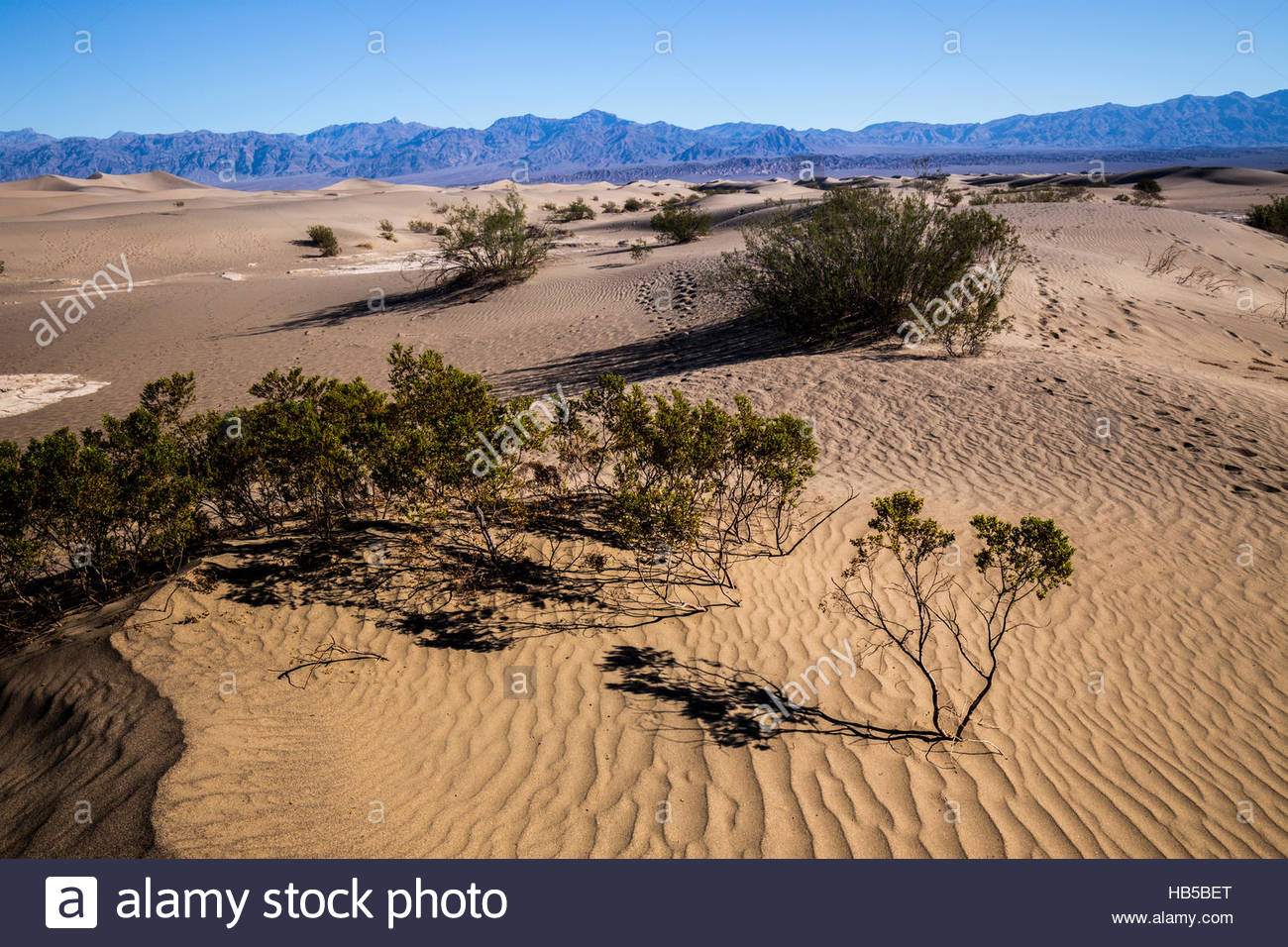 Mesquite Flat Sand Dunes, Stovepipe Wells,Death Valley,California,Unites States of America - Stock Image