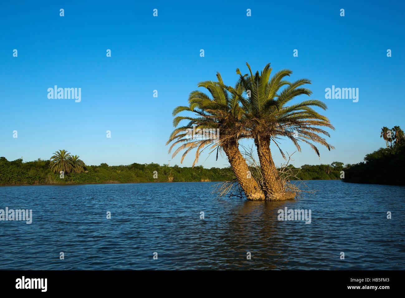 Palm tree island on Resaca de los Cuates in Bayview, Texas near the Texas/Mexico border. Stock Photo