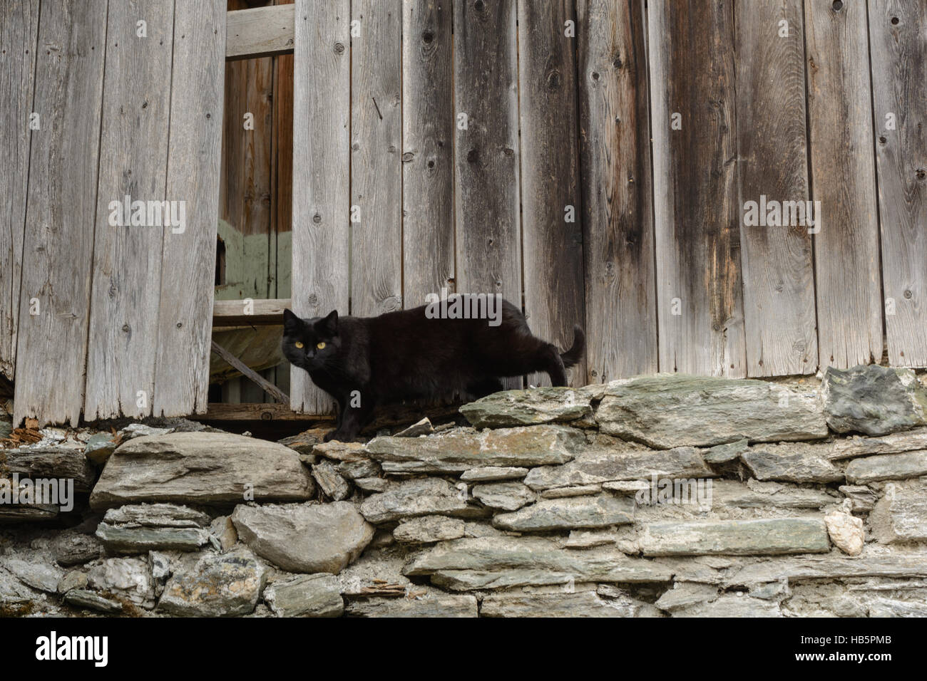 black cat lurking in the old woodshed Stock Photo