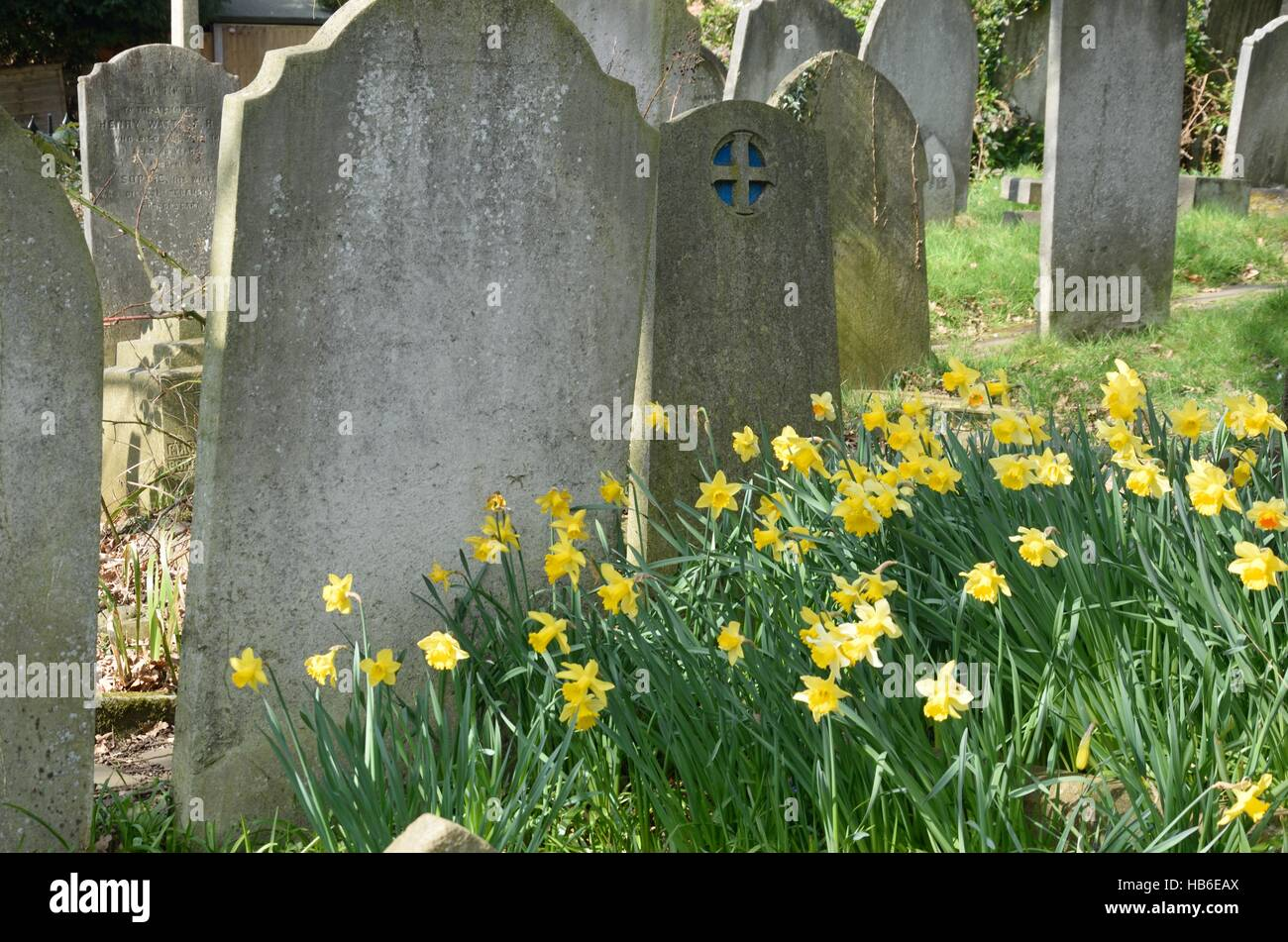 Graveyard with Daffodils - Stock Image