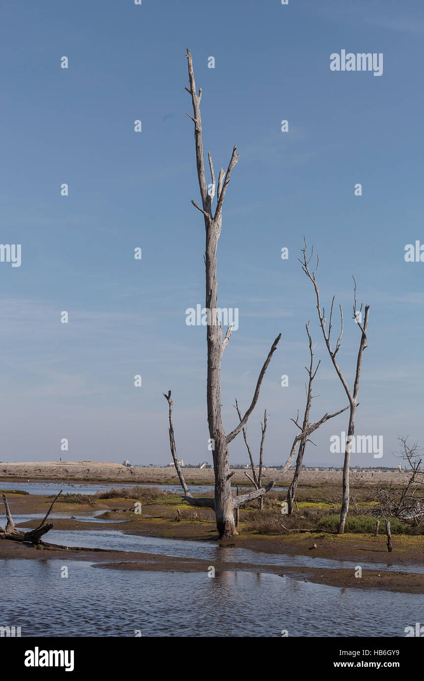 Dead trees stand tall and stark - Stock Image