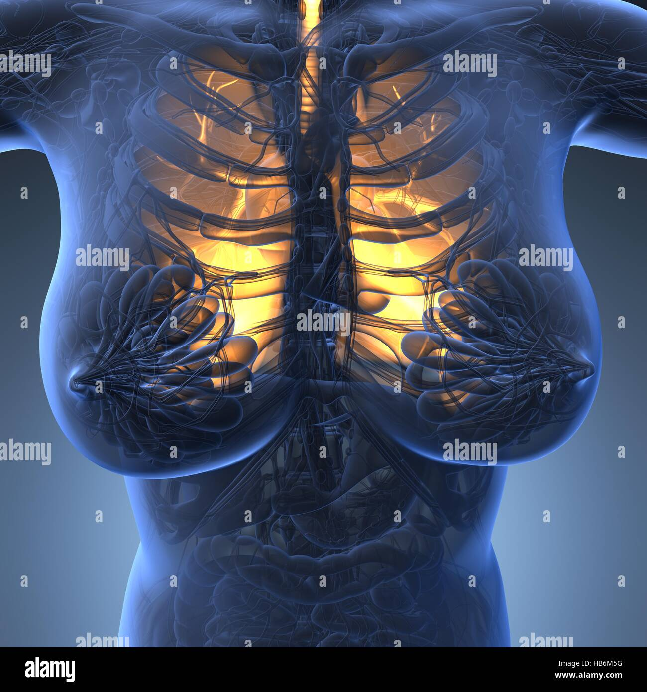 Science Anatomy Of Woman Body With Glow Lungs Stock Photo 127381340