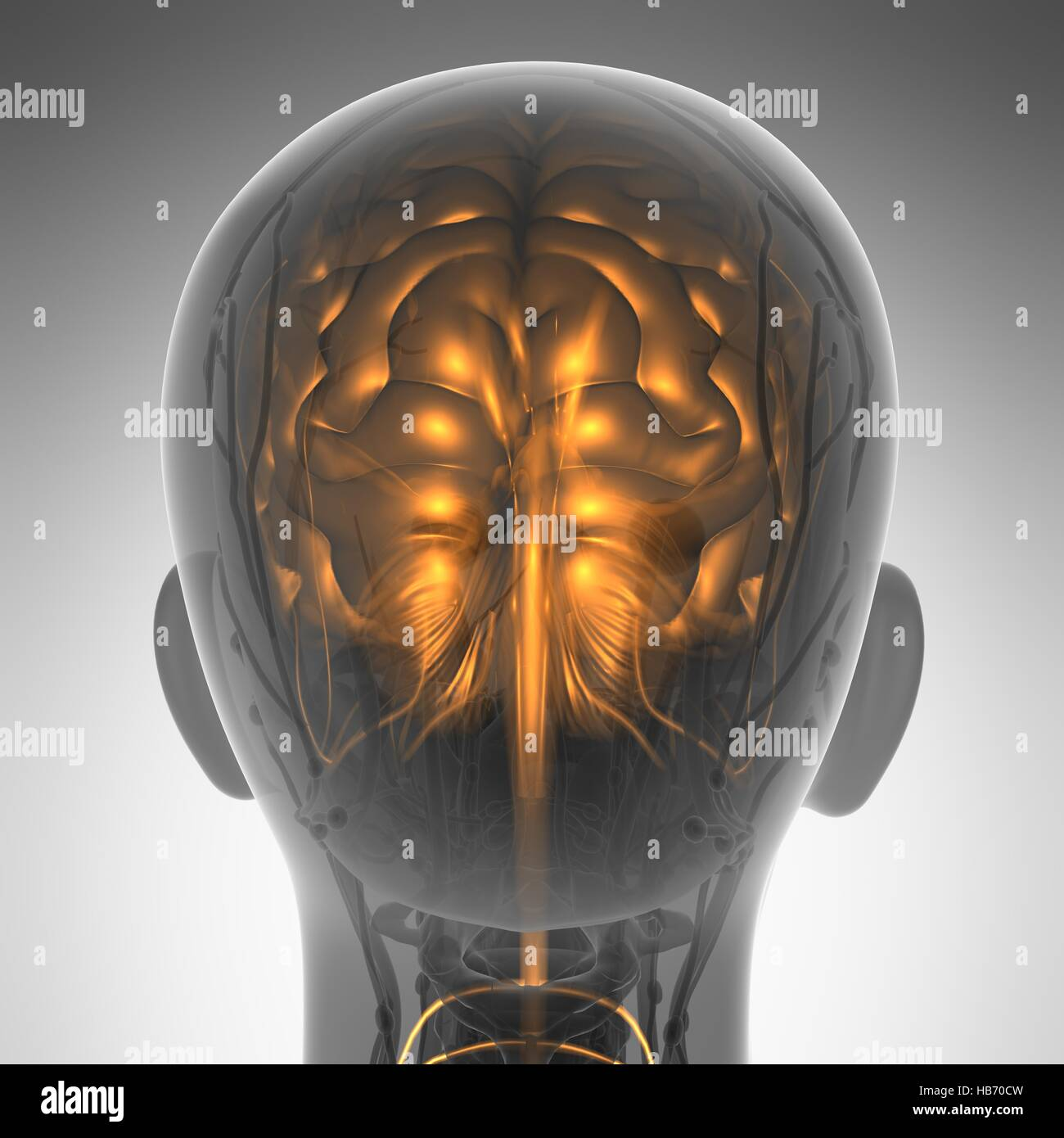 science anatomy of human brain in x-ray - Stock Image