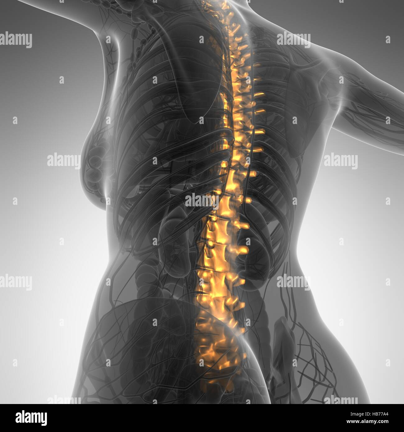 Human backache and back pain with an upper torso body skeleton Stock ...