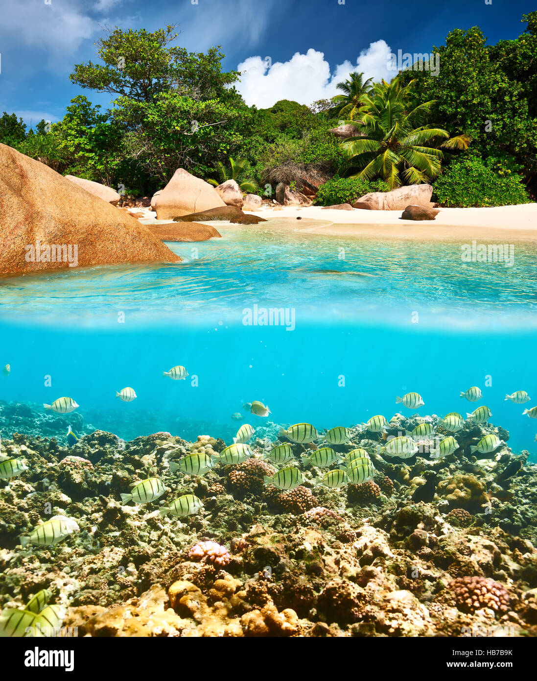Coral reef and fish at Seychelles - Stock Image