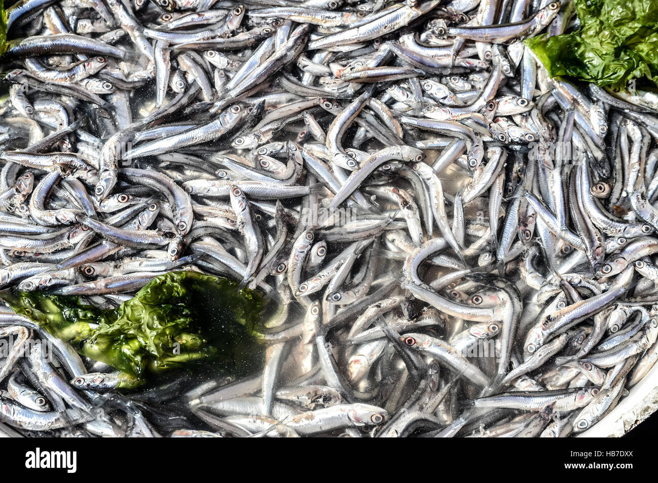 Anchovies in market - Stock Image
