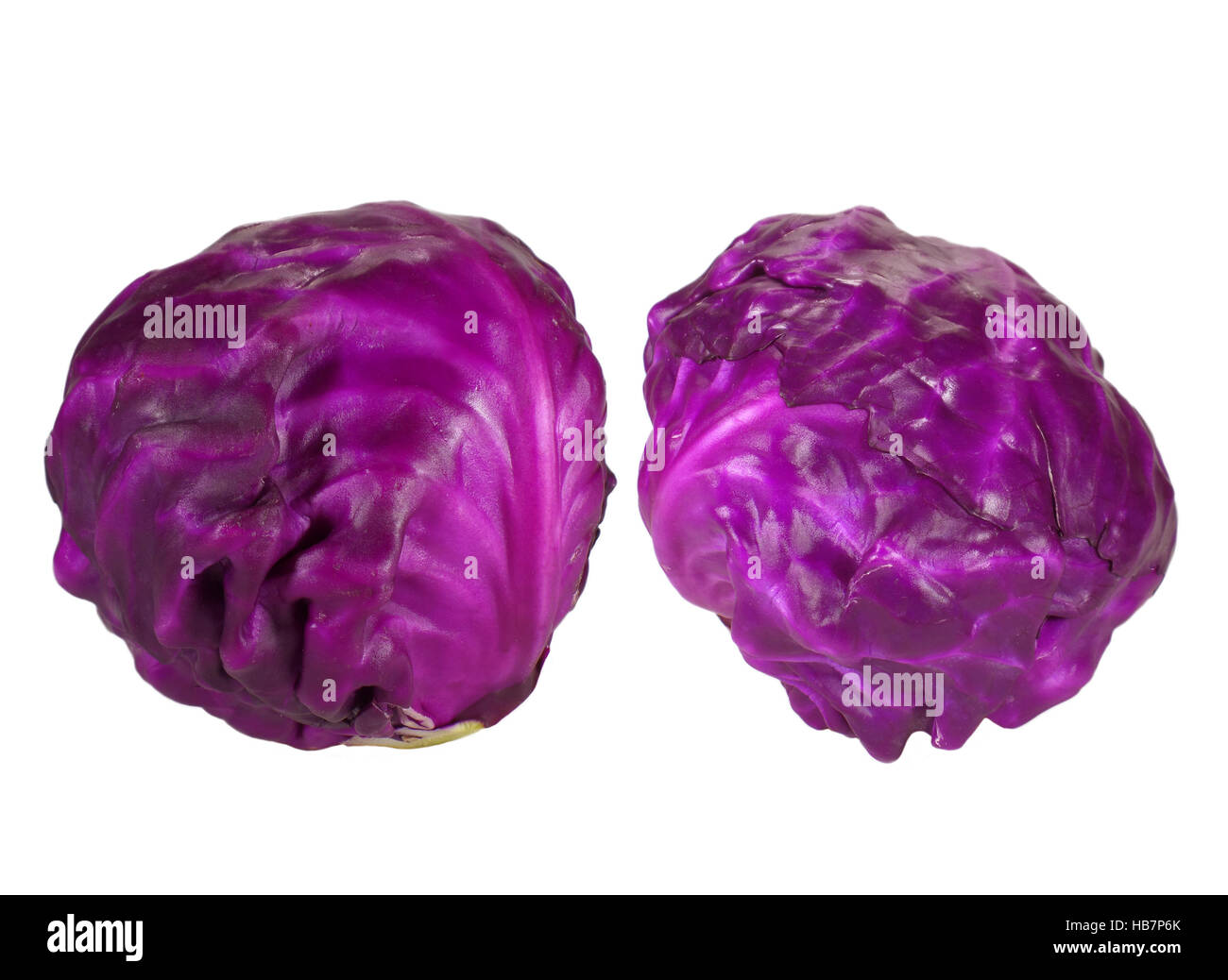 Two fresh whole red ripe cabbages isolated on white background - Stock Image