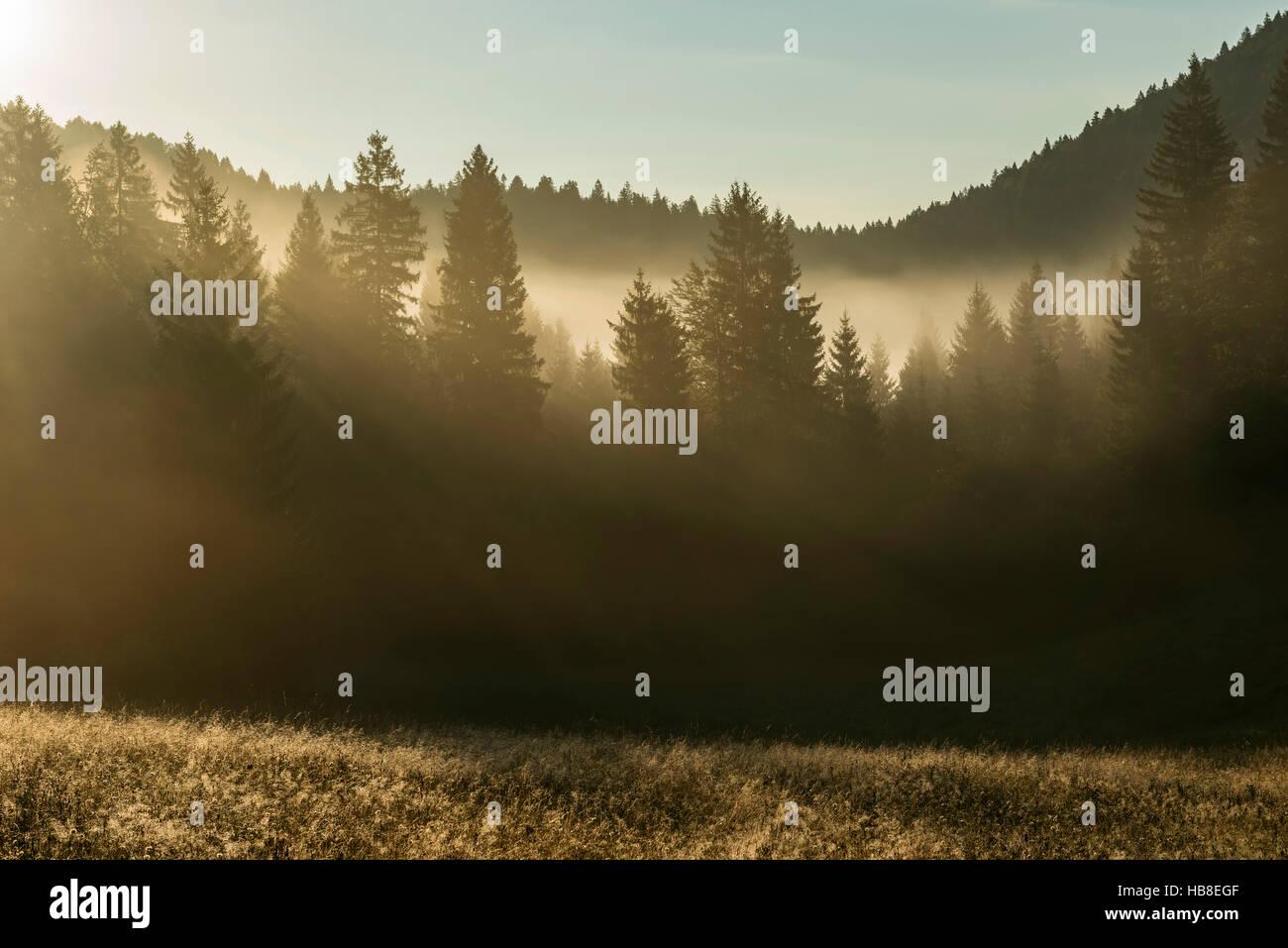 Sunlight shining through treetops, morning mist, Loski Potok, Dolenjska, Slovenia - Stock Image