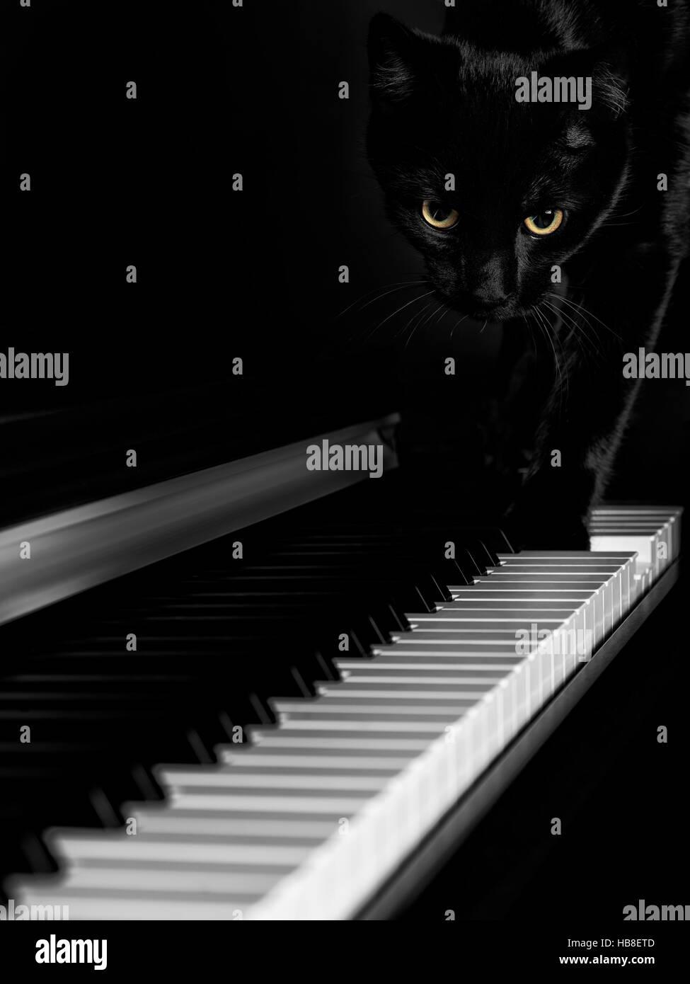 Black cat walking on a piano keyboard - Stock Image