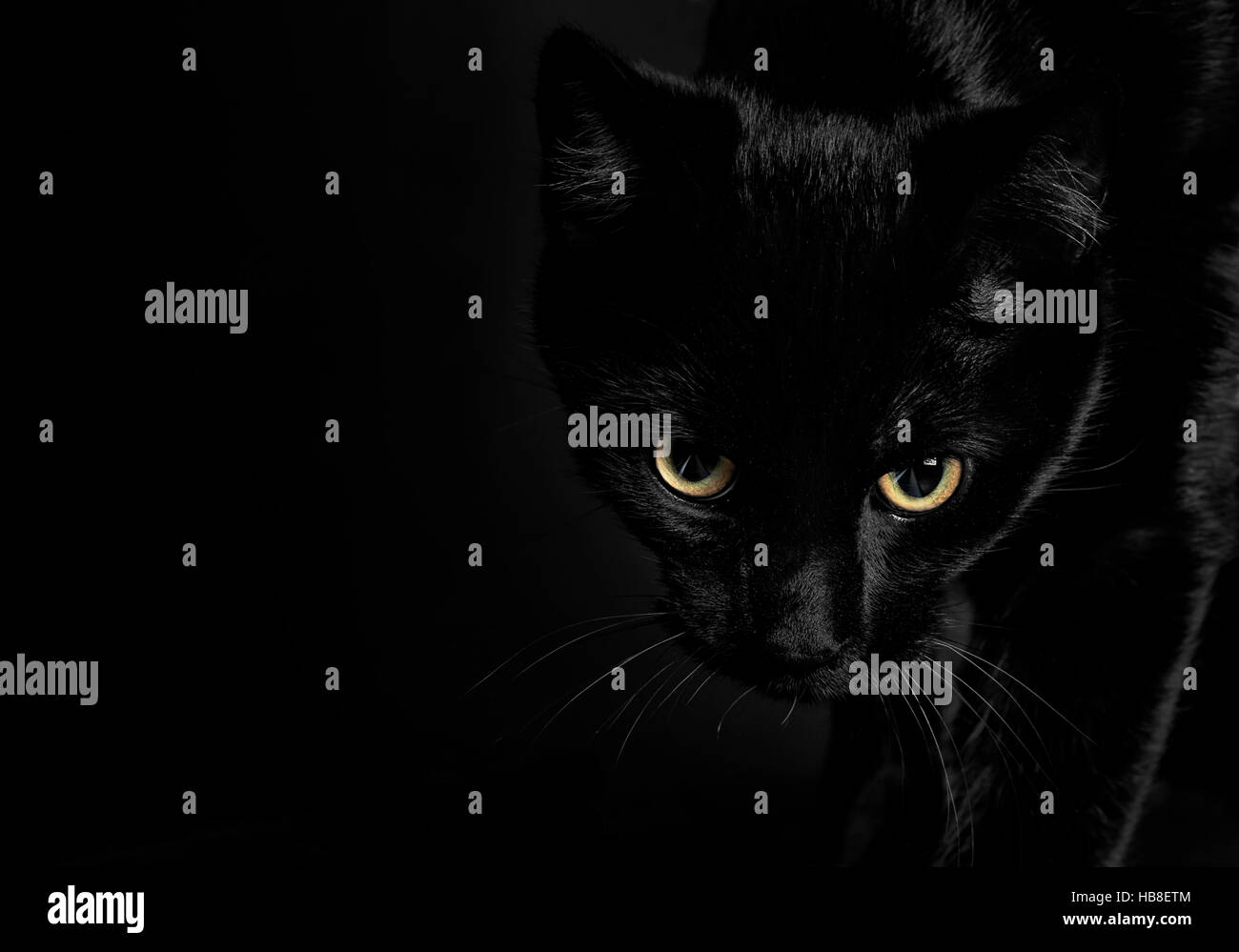 Portrait, black cat with intense look and shiny yellow eyes - Stock Image