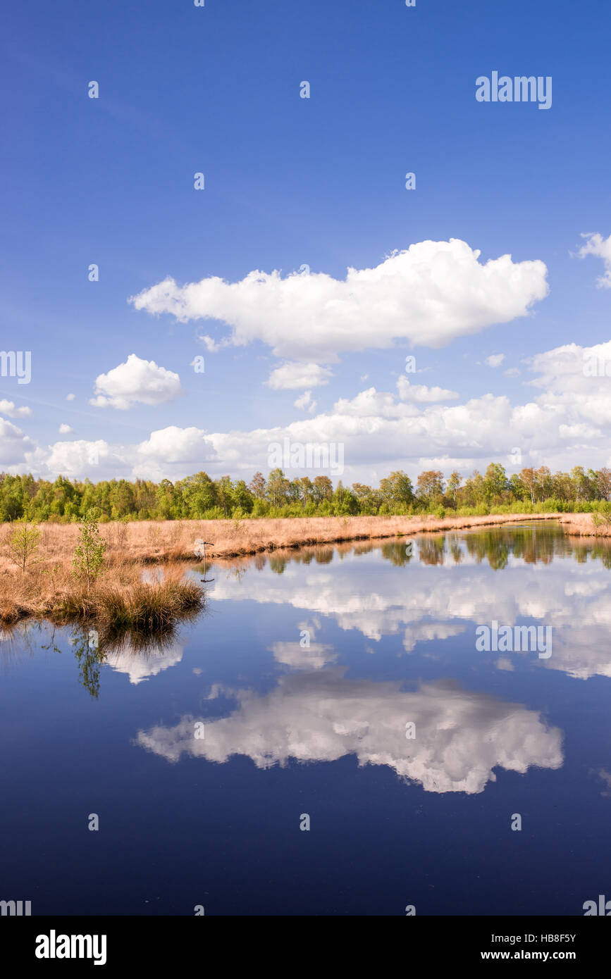 moor landscape Stock Photo