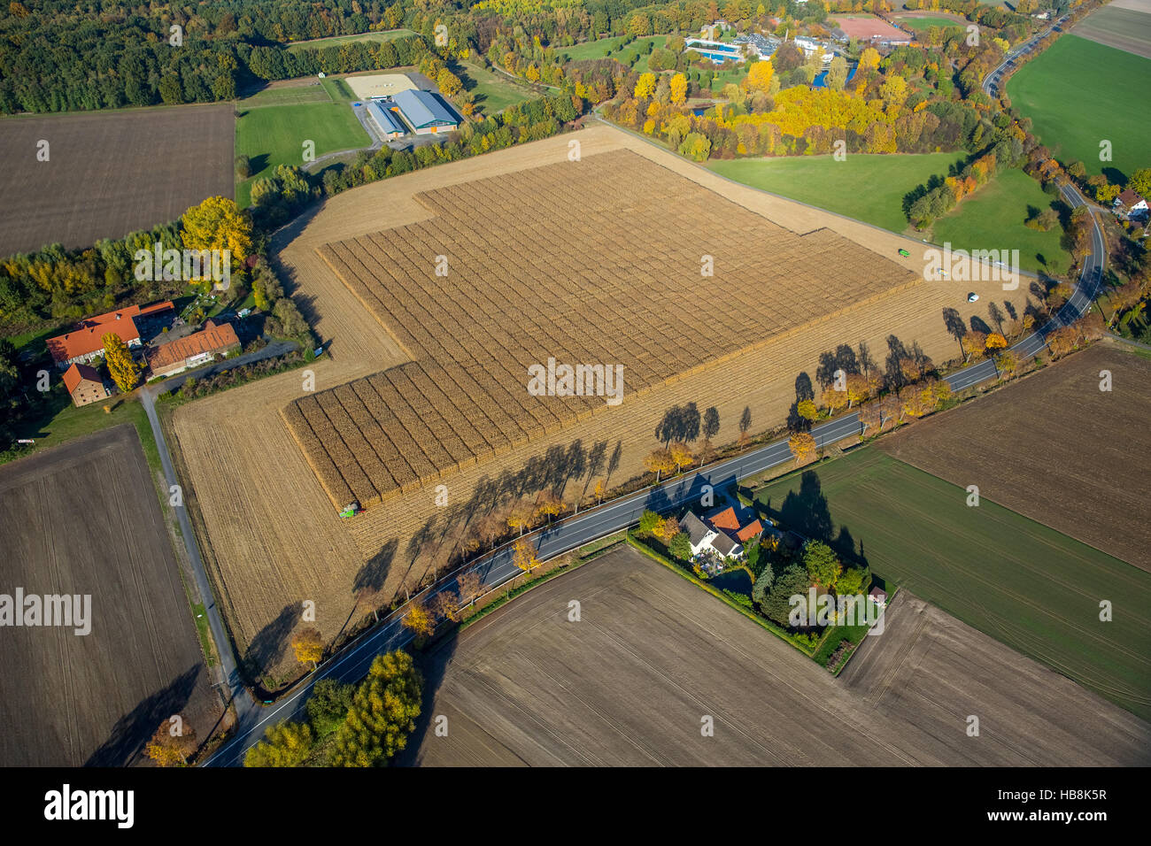 Aerial view, corn crop with scientific support Pelkum, Kamen Street Barbecke, Hamm, Ruhr, Nordrhein-Westfalen, Germany Stock Photo
