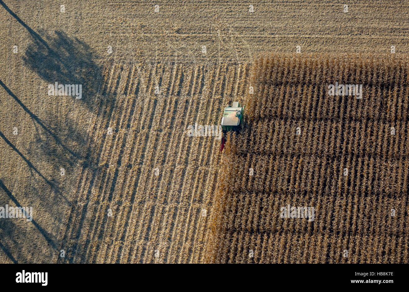 Aerial view, corn crop with scientific support Pelkum, Kamen Street Barbecke, Hamm, Ruhr, Nordrhein-Westfalen, Germany Stock Photo