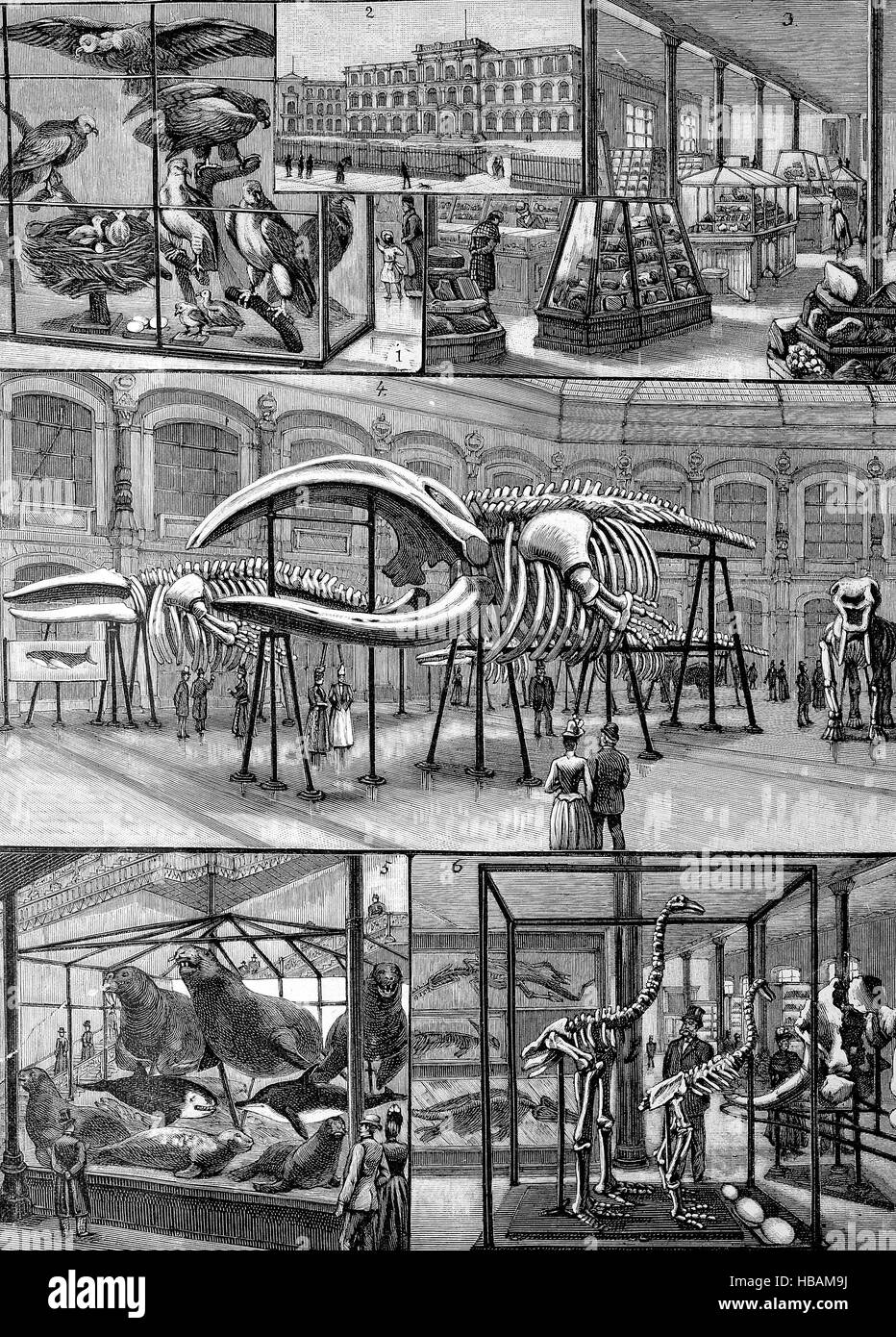 The Museum of Natural History in Berlin, Germany, hictorical illustration from 1880 - Stock Image