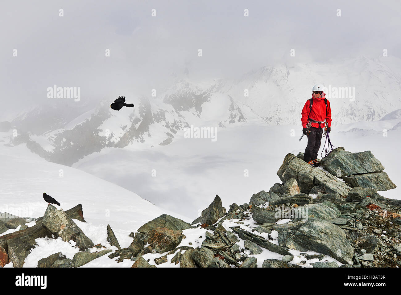 Man on top of snow covered mountain looking at bird in flight, Saas Fee, Switzerland - Stock Image