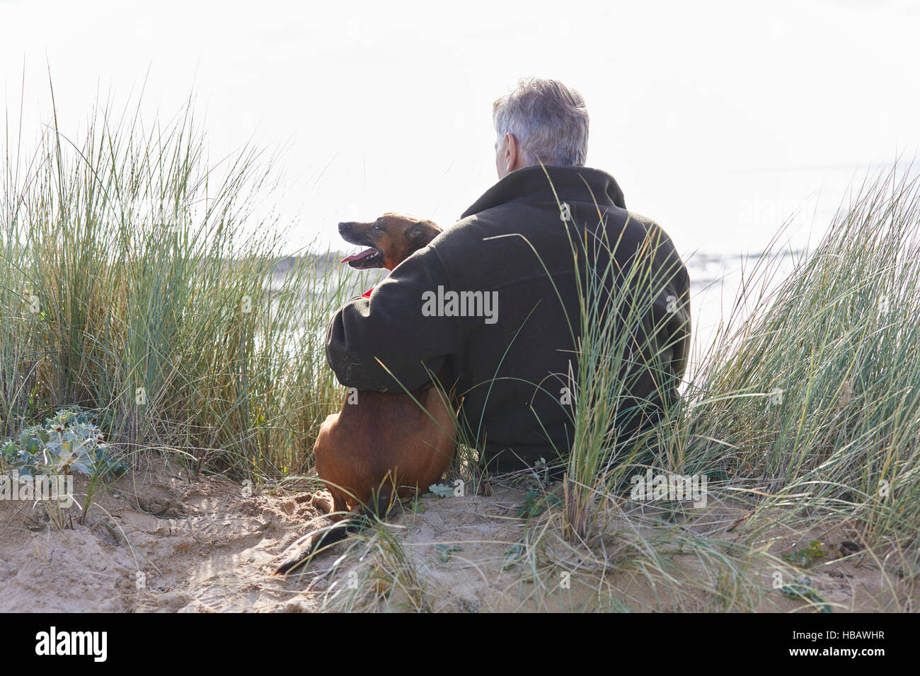Rear view of man and pet dog sitting on sand dunes, Constantine Bay, Cornwall, UK - Stock Image