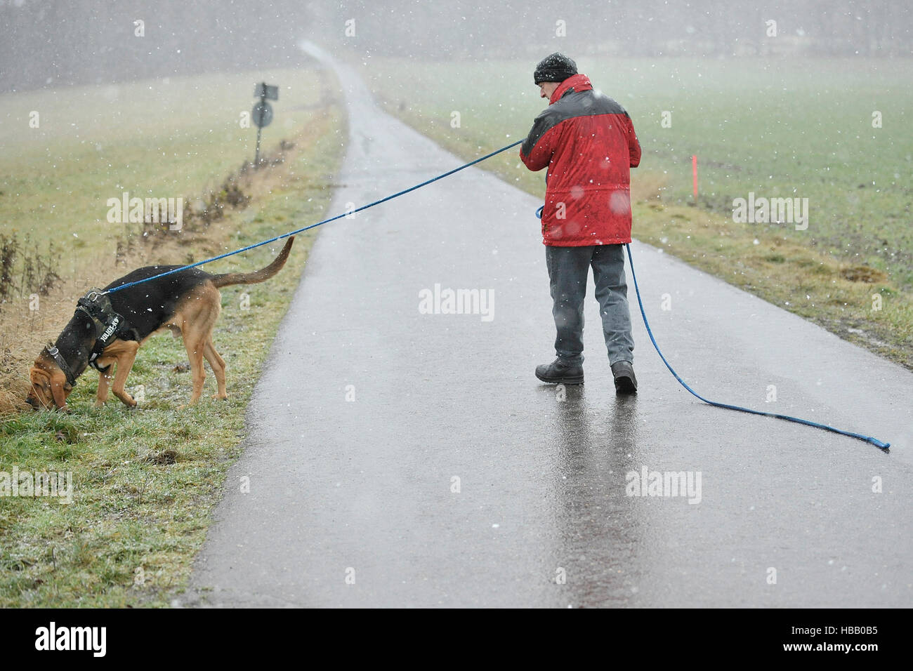 german policeman training bloodhound in blizzard conditions, germany 2011 - Stock Image