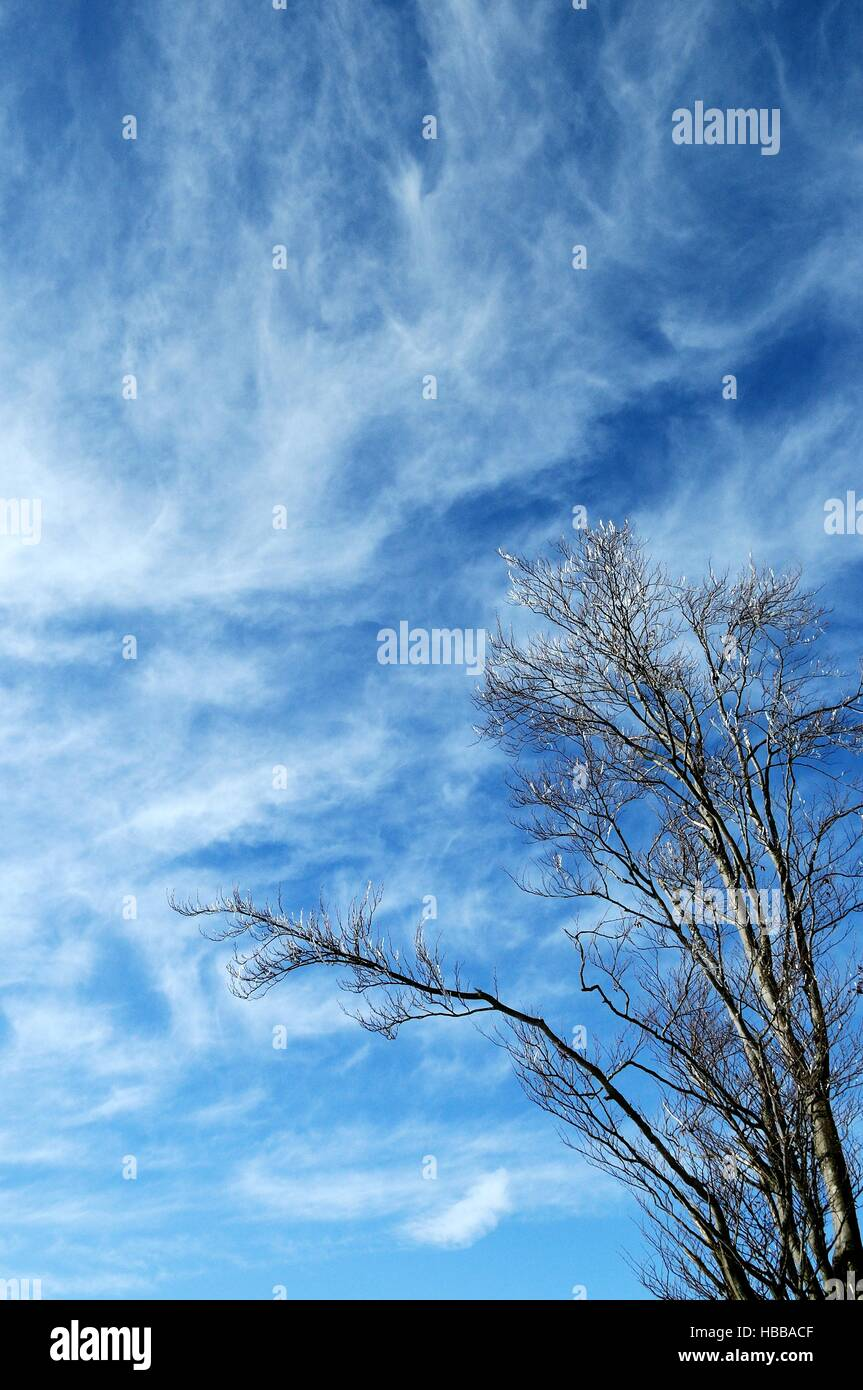 the sky above him - Stock Image