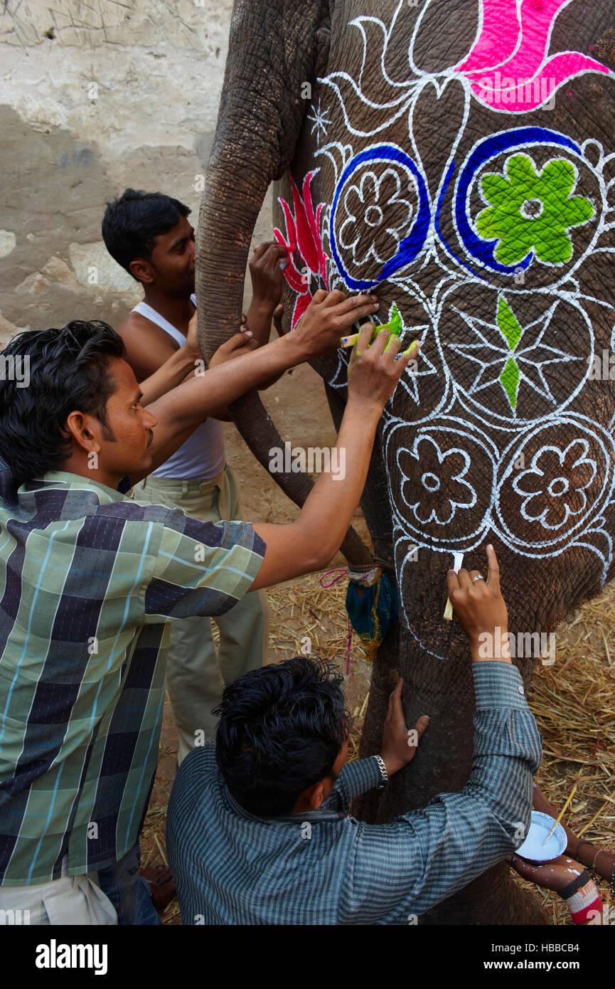 Inde, Rajasthan, Jaipur, peinture et decoration des elephants pour le festival des elephants. // India, Rajasthan, - Stock Image