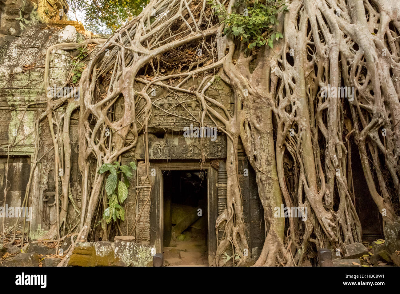 temple ruins overgrown by trees - Stock Image